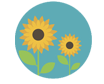 Icon of a sunflower representing Biodico's relentless search for solid crop selections for promising biofuel feedstock solutions.