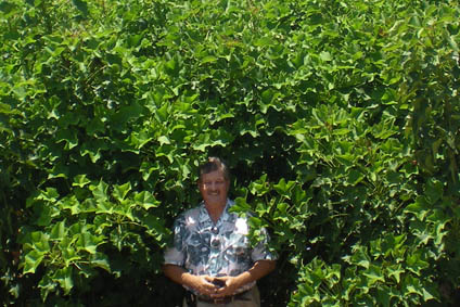 An Image of Company Founder Russ Teall in a mature Jatropha field used as a promising alternative fuel feedstock.